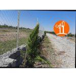 فروش زمین باغی 250 متر