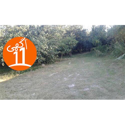 فروش زمین باغ